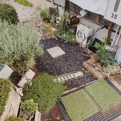 小さなお庭/お庭DIY/お庭/ガーデニング雑貨/おうちのこと/暮らし/... こんばんわー𖡼.𖤣𖥧  最近のお庭〜緑で…