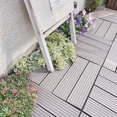 お庭DIY/お花のある暮らし/ミルクペイント/ガーデニング/小さなお庭/暮らしを楽しむ/... お庭の通路に敷き詰めたタイル♫ 雨の日の…