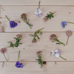 デイジー/ビオラ/アリッサム/お花のある暮らし/お花時間/暮らしを楽しむ/... お庭のお花摘み♡♡♡  アリッサムも仲間…