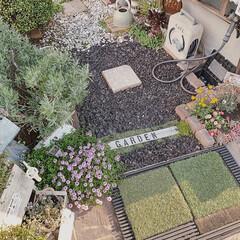 お花のある暮らし/ガーデニング雑貨/ガーデニング/ガーデン/お庭づくり/お庭DIY/... 暖かくなって、 お庭の草花がモリモリ元気…