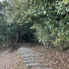 暮らしを楽しむ/ツバキ/散歩道/LIMIAおでかけ部/おでかけ/風景/... お出かけ先で見つけた素敵な森の散歩道✨✨…