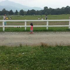 夏/チビ助/ひとり/清里/おでかけ 清里の牧場にて。 広い草原をひとりでトコ…
