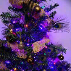 クリスマスツリー/孔雀/羽/ライトアップ/クリスマス 家には大小合わせて4つのクリスマスツリー…