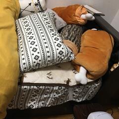 抱き枕/寝具/ニトリ 枕付近。 肉に埋もれてる木(抱き枕)がお…