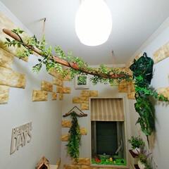 フェイクグリーン/流木DIY/流木アレンジ/流木グリーン/流木インテリア/流木リメイク/... 今日は1日暇だったのでカフェ風カーテンに…