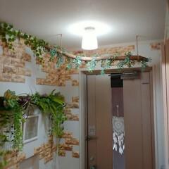 フェイクグリーンアレンジ/フェイクグリーン/玄関リメイク/玄関/流木インテリア/流木/... 流木にフェイクグリーンを巻いて 流木イン…