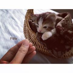 羊毛フェルト/羊毛 羊毛フェルトの子猫。  あったかい毛布の…(1枚目)