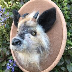 羊毛フェルト/羊毛 ニホンカモシカ。 剥製のような羊毛のニホ…(1枚目)