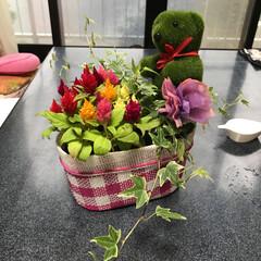 母の日 かわいいお花をもらいました💐