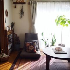 ブックシェルフDIY/植物のある暮らし/暮らしのキロク/レトロ/い草のラグ/ちゃぶ台/... この雰囲気もそろそろ見納めかなっ👈 そろ…