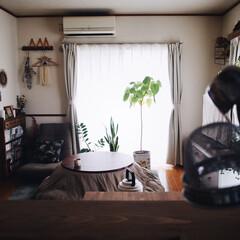 キッチンカウンターDIY/ちゃぶ台/観葉植物のある暮らし/こたつ/インテリア/賃貸/... こたつのある部屋♥︎ もう最近はポカポカ…