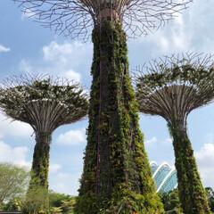 観光/楽園/春休み/海外旅行/植物園/ガーデンズバイザベイ/... シンガポール旅行記  『Gardens …