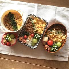 お弁当/手作り弁当/3色丼弁当/作り置きおかず/曲げわっぱ弁当箱/セリアボヌール/... わたしの手作りと言えば、お弁当🍙  長女…