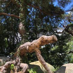 変な木/家族旅行/尾道/おでかけワンショット 夏休みに行った『尾道』散策中に突然現れた…