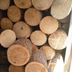 手づくり/照明/アンティーク/自然/ハンドメイド/木材 当店は、北海道十勝の自然木材を使用してお…