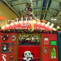 クリスマス/パンダ/フォロー大歓迎/おでかけ パンダちゃんとX'masのコラボレーショ…