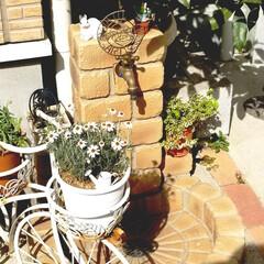 ガーデニング/グリーン/インテリア/住まい お気に入りのガーデン水栓☆ すくすくお花…