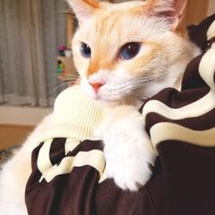 猫/抱っこ/ペット 凛々しいお顔(笑)