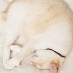 お昼寝/猫 幸せそうに寝ちょります(笑) クッション…