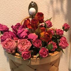 薔薇/ドライフラワー/雑貨/ダイソー/インテリア/住まい/... 4種類の薔薇のドライフラワー🌹 ピンクは…