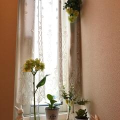 多肉植物/うさぎ/フェイク/トイレ/グリーン/雑貨/... トイレの小窓