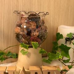 ポプリ/キャンディーポット/グリーン/雑貨/100均/セリア/... 100均の金魚鉢と植木鉢で作ったキャンデ…(1枚目)