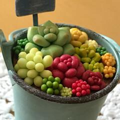 樹脂粘土/多肉植物/グリーン/雑貨/100均/セリア/... 樹脂粘土の多肉植物の寄せ植え