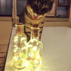 ほんわか/猫のいる生活/綺麗/瓶/電飾/ビー玉/... ビー玉をフライパンで焼いて冷水に浸し中に…(1枚目)