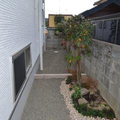新築/植栽/和 新築 植栽