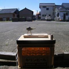 旧盆/バルコニー/雑貨/おうち時間/夏グッズ/夏を楽しむ/... 旧盆  渚のバルコニーで待ってる 。(1枚目)