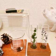 ハリネズミ/試験管/ワッツ/ドライフラワー/雑貨/100均/... 沖縄で拾った松ぼっくりに紙粘土で顔をつけ…