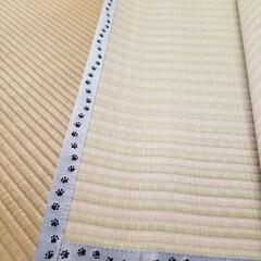 上敷き/畳縁/肉球 足跡柄の畳縁で作った上敷き