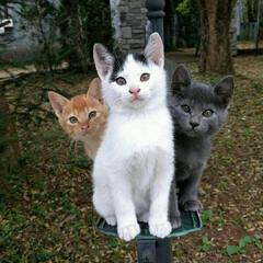 子猫/ペット/猫 三匹の子猫の奇跡の瞬間~✌