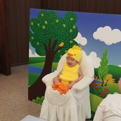 ヒヨコ/4ヶ月/甥っ子 ピヨピヨピヨピヨピヨピヨピヨピヨ🐥💓  …