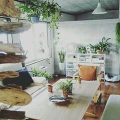 無印良品収納/リビングでもダイニングでも使えるシリーズ/植物と暮らす/無印良品/住まい 我が家のリビング 無印良品のリビングでも…