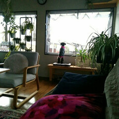 愛犬との暮らし/プードル/ペット/住まい 毎日の日課→老人ホームに向かうおばあさん…