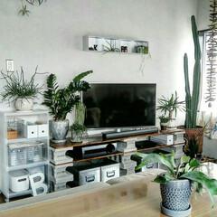 植物/無印良品/DIY/インテリア/住まい ホームセンターで購入して作った我が家のT…