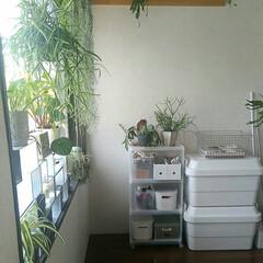 ポリプロピレン/壁に付けられる家具/インテリア/家具/無印良品 無印良品収納