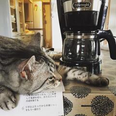 猫/家電/デロンギ/住まい/ペット/キッチン雑貨 6月の地震でコーヒーメーカーが下に落ちて…