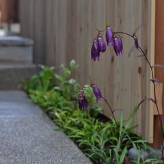 庭/アプローチ/洗い出し/板塀 洗い出しのアプローチと僅かなスペースを生…