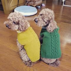 可愛い/色違い/セーター/手編み/わんちゃん/犬/... 色違いで柄もちょっと変えて編んでみた! …