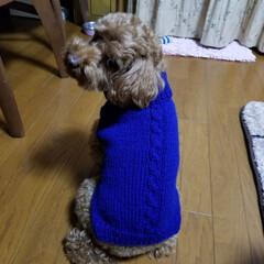 編み物/女の子/男の子/ピッタリ/小さい/青色/... わんちゃんのセーター編んでみた! 男の子…