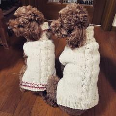 手編み/わんちゃん/セーター/お揃い/ペット/犬/... 我が家のわんちゃんたち サムくんとエナち…