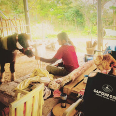 牧場/馬/ニワトリ/ヤギ 腰を落とせば動物たちが集まってきます。