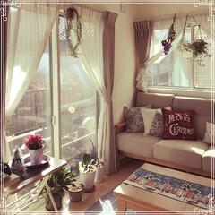 寒い朝/ピンクのポインセチア/フェイクグリーン/ドライフラワー/クリスマス/雑貨/... 外に出るのが辛い朝…。 いよいよ本格的な…