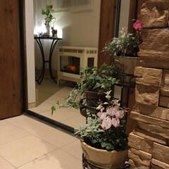 玄関/フラワースタンド/フリルシクラメン/寄せ植え/暖炉型ヒーター/玄関入口 玄関入口。 ホームセンターで買ったフラワ…