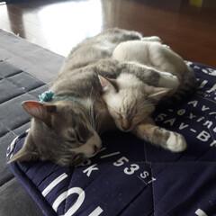 ペット 気持ち良く寝てる😴 腕枕とか可愛い過ぎる…(2枚目)