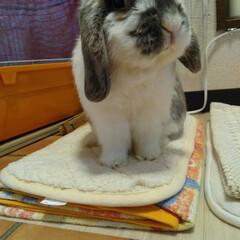 ウサギ 奇跡の一枚です