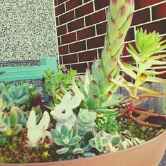 寄せ植え 日々成長~⤴⤴花がさくのが楽しみです🎵