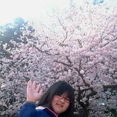 弘前公園/弘前/さくら祭り/春のフォト投稿キャンペーン/ありがとう平成/令和カウントダウン/... 弘前公園のさくら祭りです。日曜は五分咲き…